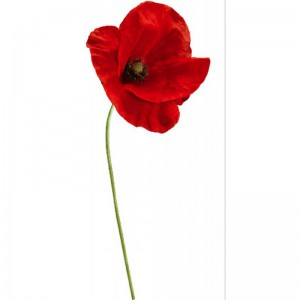 grand-sticker-coquelicot